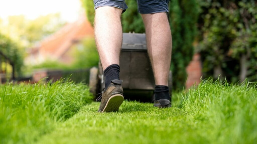 What Do Lawn Care Services Do